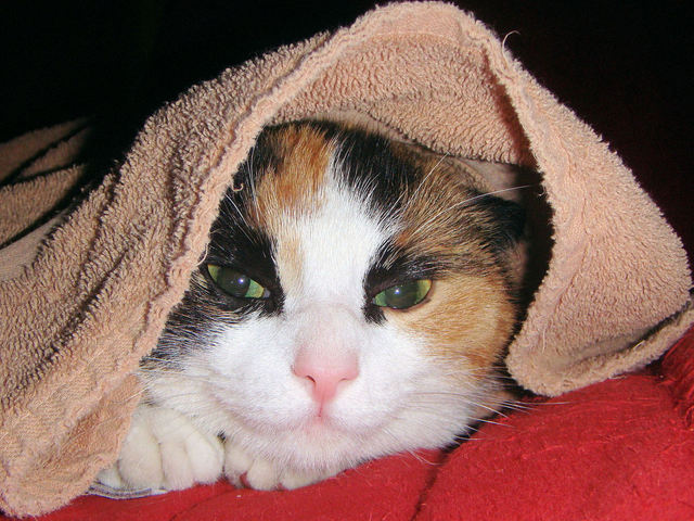 cat-under-a-towel-1249897-640x480_1.jpg